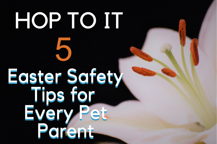 Hop to It: 5 Easter Safety Tips for Every Pet Parent