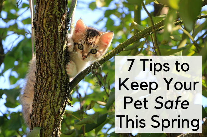 7 Tips to Keep Your Pet Safe This Spring