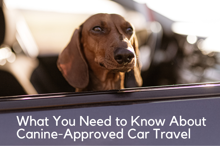 What You Need to Know About Canine-Approved Car Travel