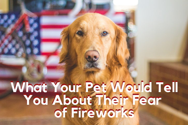 What Your Pet Would Tell You About Their Fear of Fireworks