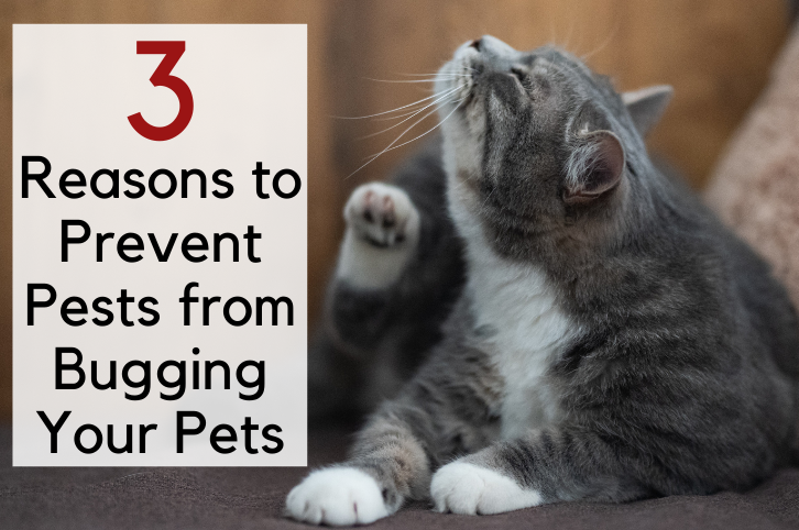 3 Reasons to Prevent Pests from Bugging Your Pets