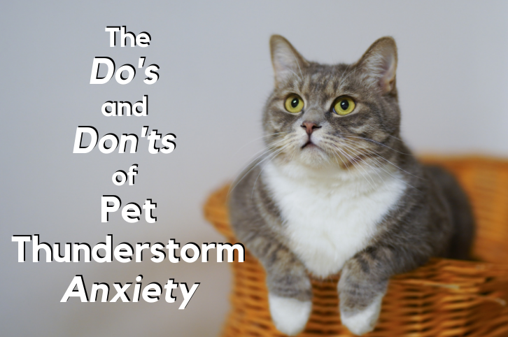 The Dos and Don'ts of Pet Thunderstorm Anxiety