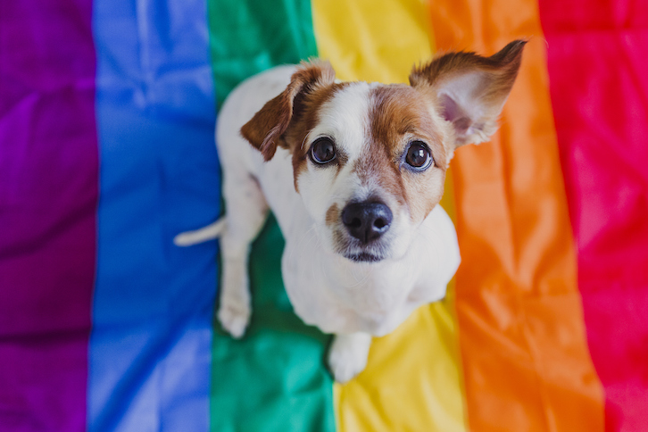 How to Safely Celebrate Pride Month with Your Pet