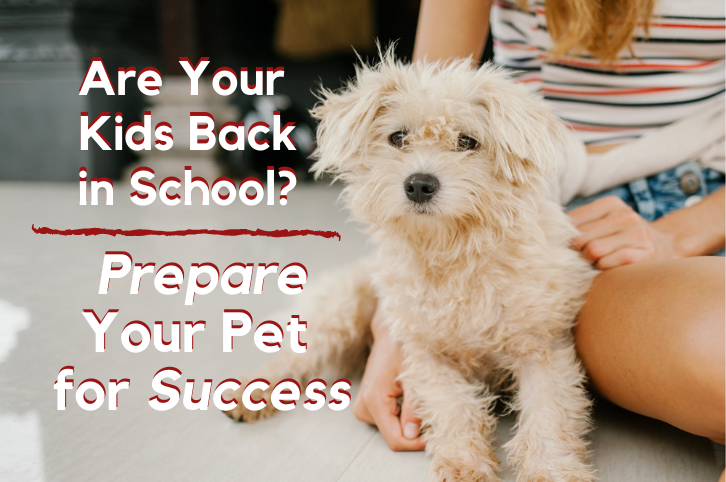 Prepare your pet for back to school success