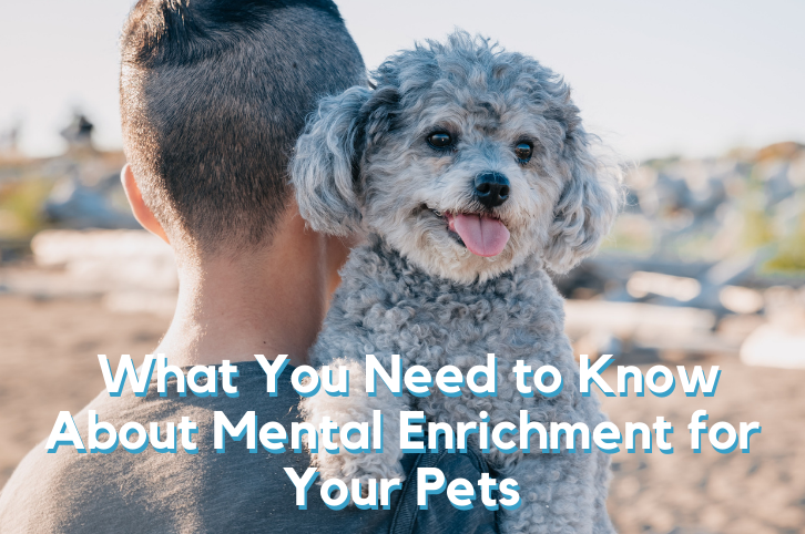 What You Need to Know About Mental Enrichment for Your Pets