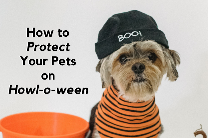How to Protect Your Pets on Howl-o-ween