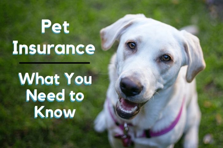 Pet insurance – What You Need to Know